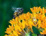 Michigan Extension bee
