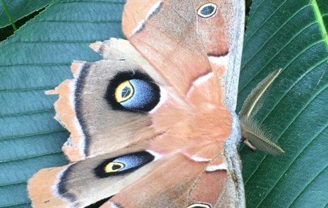 winged blue eyes