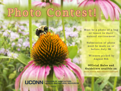 photo contest information
