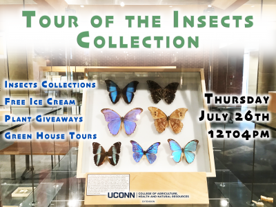 insect collection flyer