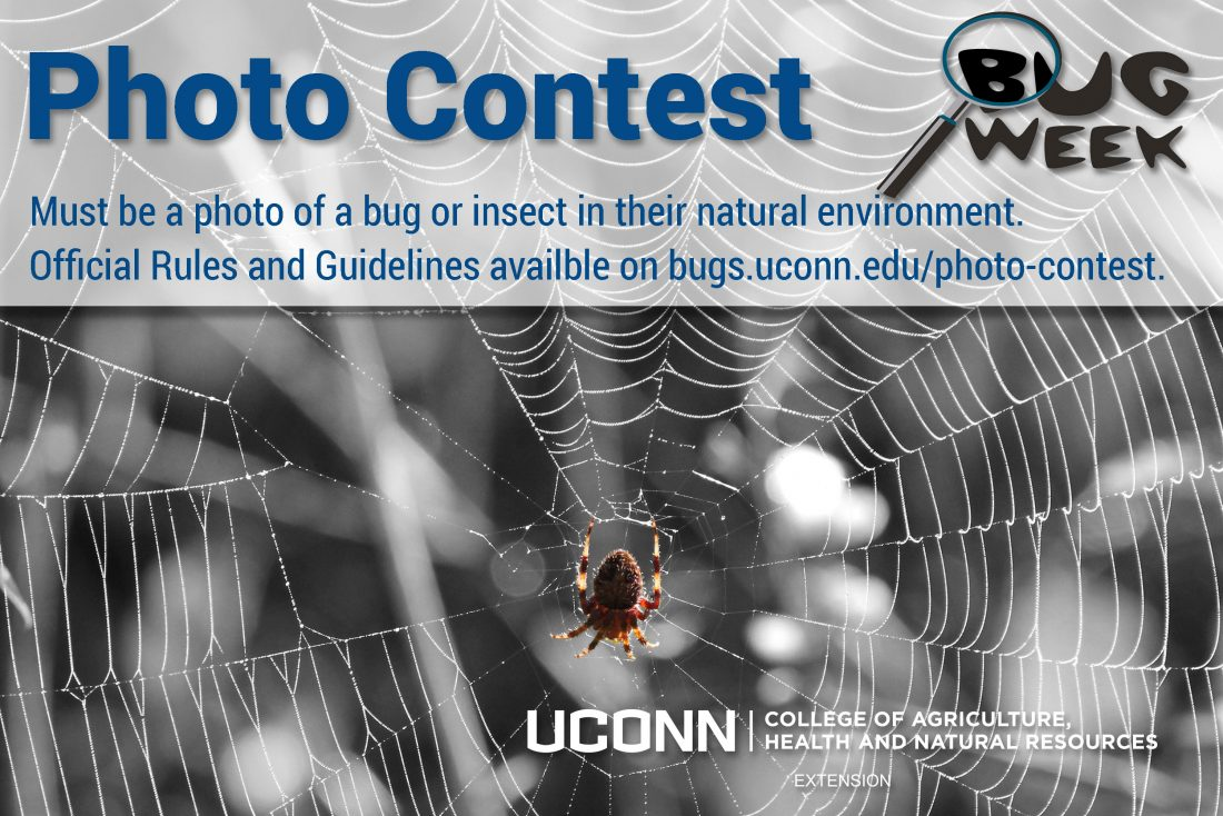 Photo Contest Postcard