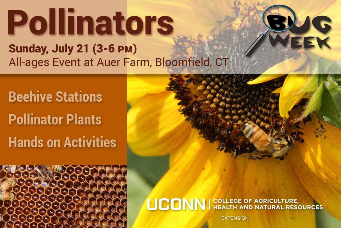 Pollinators Postcard
