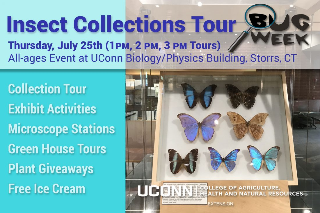 Insect Collections Tour Postcard