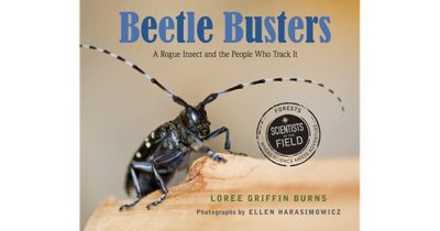 Beetle Busters book cover