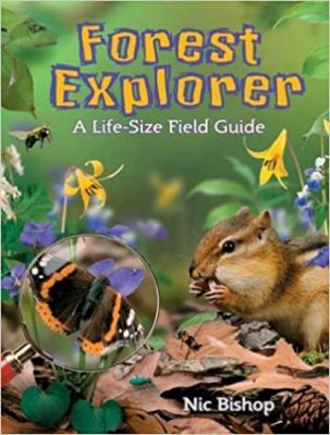 Forest Explorer book cover