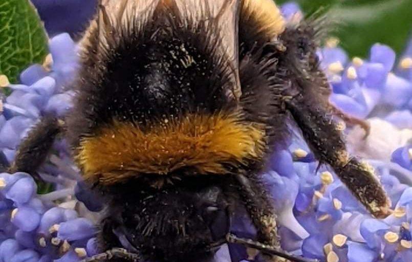 bee pollinating purple flower